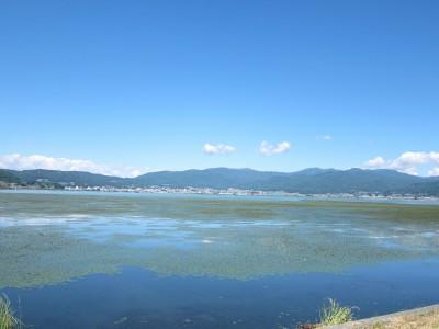 諏訪湖のひし